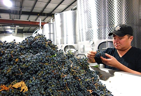 OurPass-Winemaking00
