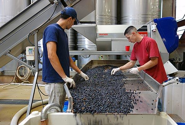 OurPass-Winemaking03